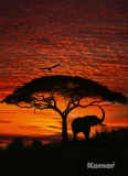 Фотообои Komar National Geographic 4-501 African Sunset