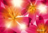Фотообои Komar Wellness/Floral 8-928 Summer Sun