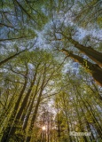 Фотообои Komar National Geographic 4-522 Canopy